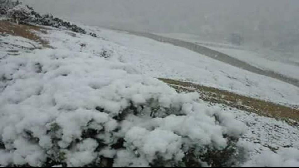القصرين الثلوج لجنة مجابهة الكوارث