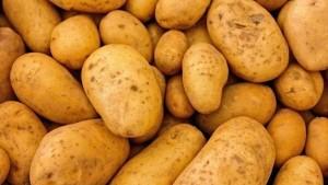 اتحاد الفلاحة : 'البطاطا المستوردة من مصر مسقية بمياه المجاري'