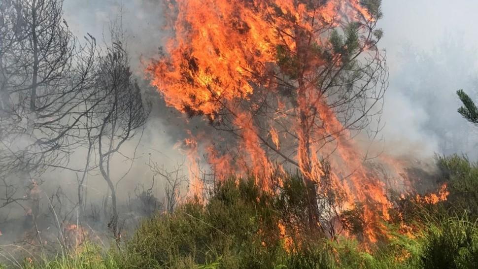 الحرائق تكتسح الغابات الفرنسية