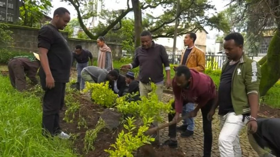 أثيوبيا: غراسة  350 مليون شجرة في يوم واحد