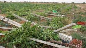 اضرار الفلاحة تونس