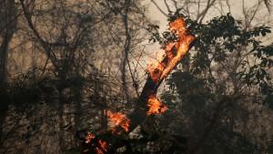 حرائق غابات