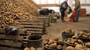 الكشف عن مخزن معدّ لاحتكار البطاطا