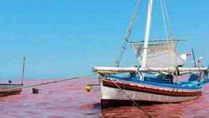قابس:بحّارة الصيد الساحلي التقليدي يحتجّون