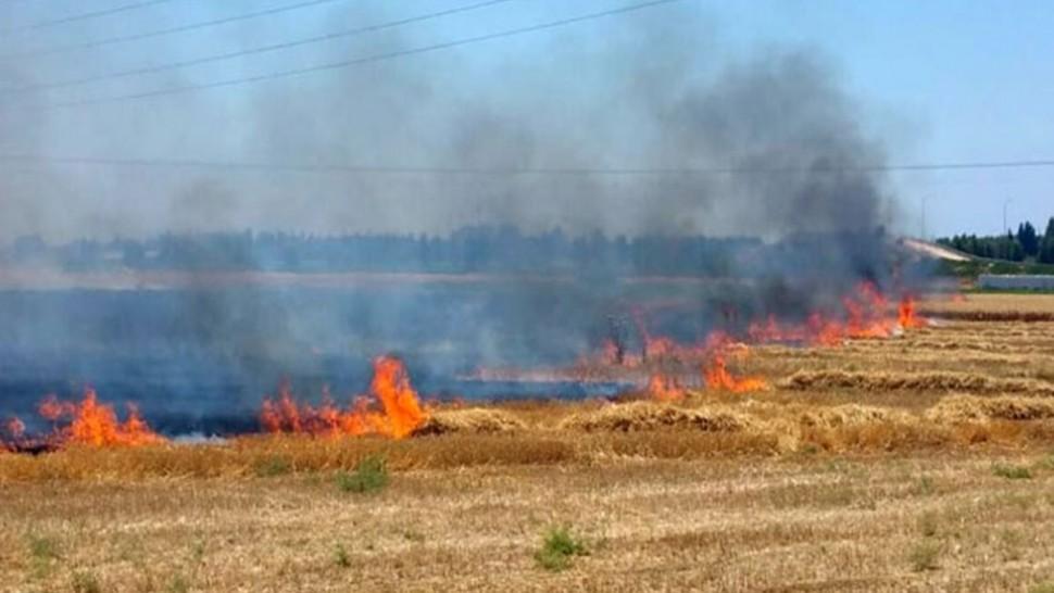 منوبة : السيطرة على حريق اتى على هكتارين من الشعير تابعة لشركة إحياء في الحفصية ببرج العامري
