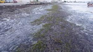 صفاقس : مشروع بيئي للتخلص من الطحالب البحرية