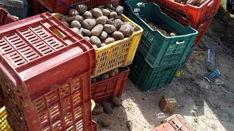 تمكنت مصلحة الجودة بالإدارة الجهوية للتجارة بقابس بالإشتراك مع مصالح الصحة العمومية ودائرة الإنتاج النباتي بمندوبية الفلاحة من حجز وإتلاف أكثر من 10 أطنان من البطاطا الفاسدة .