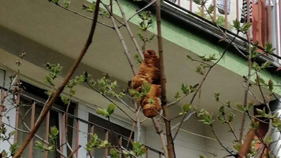 قطعة كرواسون تثير الرعب في حيّ بجنوب بولندا