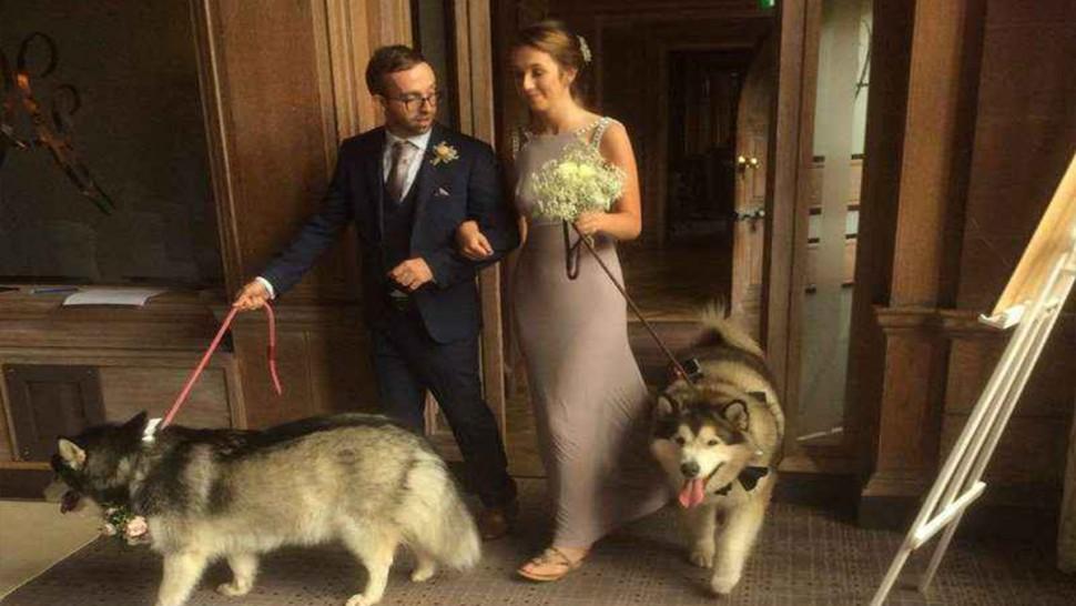اسبانيا : مشروع قانون يفرض تناوب الزوجين على رعاية الحيوانات بعد الطلاق
