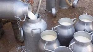 ايقاف تجميع الحليب كليا ايام 12و13و14 ماي 2021