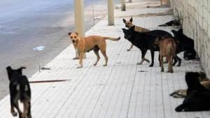 إدارة الصحة بصفاقس : تكثيف حملات التلقيح و قنص الكلاب السائبة لمقاومة داء الكلب