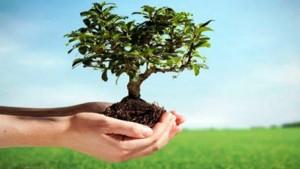 وزارة البيئة تستعدّ لغراسة مليون شجرة في المناطق العمرانية