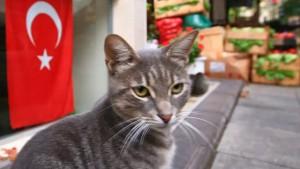 تركيا تطرد يابانيا بسبب خطف القطط وأكلها