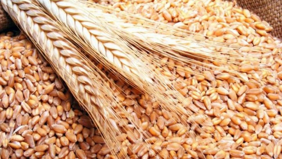 صابة الحبوب لتونس هذا الموسم بلغت 4ر16 مليون قنطار