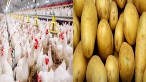 بداية من يوم الغد: تسعيرات جديدة لمادة البطاطا ومنتوجات الدواجن