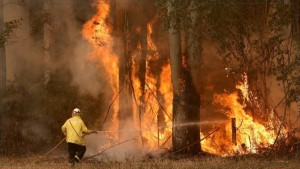 نشوب حريق بالغابة الشعراء لمنطقة بشاطر من معتمدية بنزرت الجنوبية